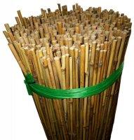 Bambusstock Ø5-10mm 120cm